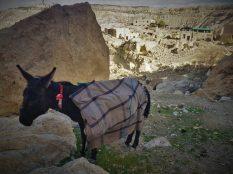 Usamljeni magarac (foto TRIS/G. ŠIMAC)