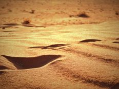 Stope u pijesku (foto TRIS/G. ŠIMAC)
