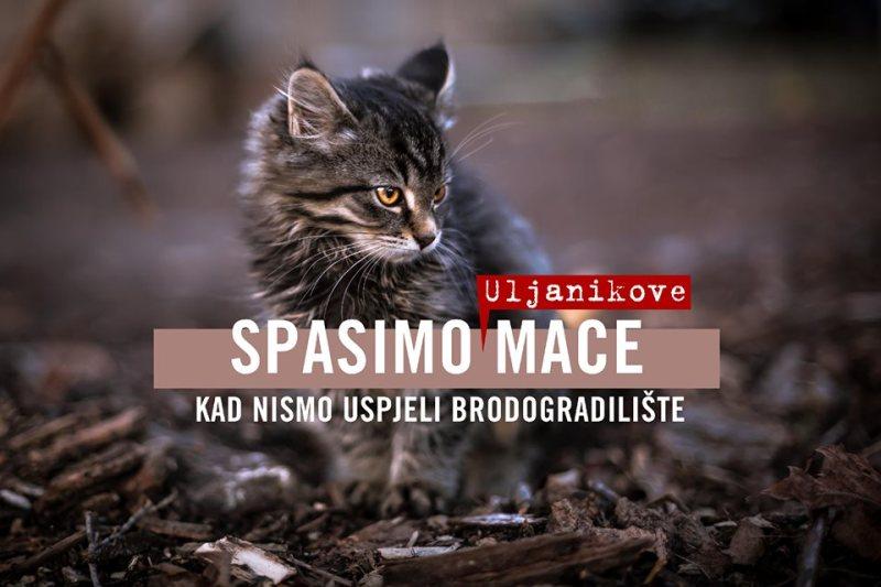 Mijao Uljanik – mačke, mačci i mačići ostali bez radničkih marendi: Spasimo mace kad nismo brodogradilište (i radnike)