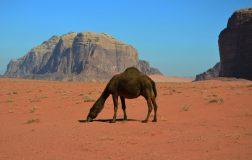 eva u prekrasnom krajoliku Wadi Ruma (foto Joso Gracin)