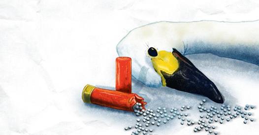 BIOM traži zabranu olovne sačme na rijekama, jezerima i močvarama: Ispucane stotine tona lovačkog olova koji truje ljude i prirodu