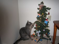 Jeter, our newest family member and the Christmas tree.