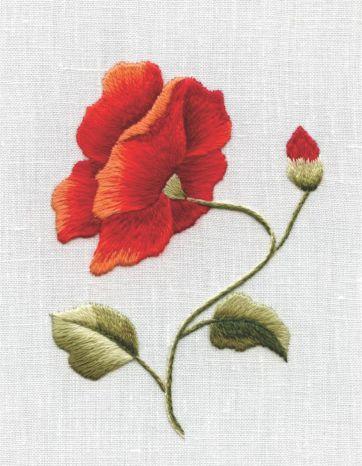 icelandic poppy