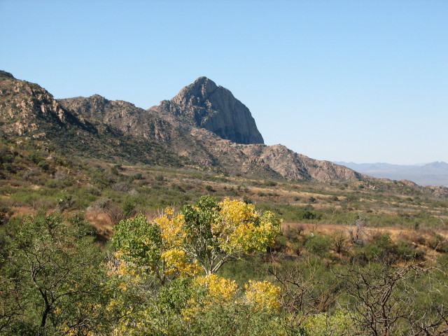 Elephant Head at Madera Canyon