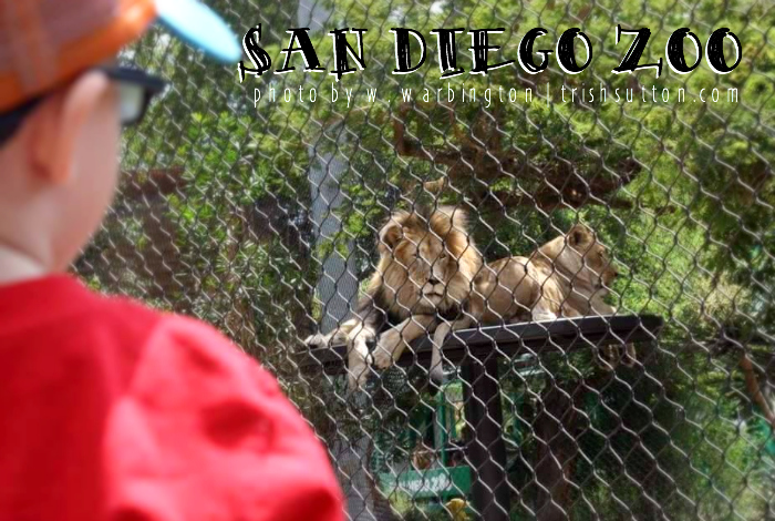 San Diego Zoo; Where Life Happens. Celebrate 100 years during the centennial summer. TrishSutton.com #sdzoo100 https://ooh.li8e68002
