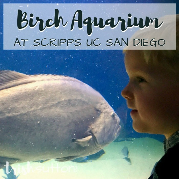 Birch Aquarium at Scripps UC San Diego, TrishSutton.com