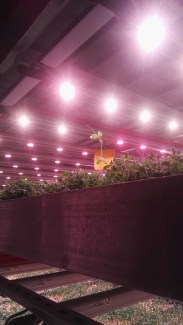 LED lighting at Unit 84