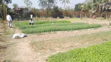 Bansay Reak Secondary School Vegetable Garden