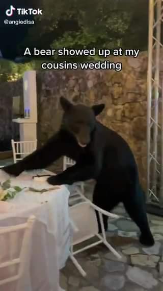 Orso irrompe al matrimonio, invitati rimangono immobili e filmano la scena —>