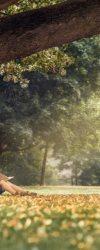 Cậu bé dưới bóng cây – Trí Thức VN