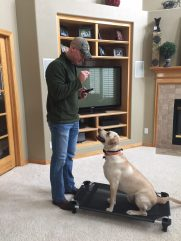Dog Training for Attention