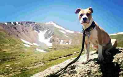 Triumphant Canine – What is special about Oscar?