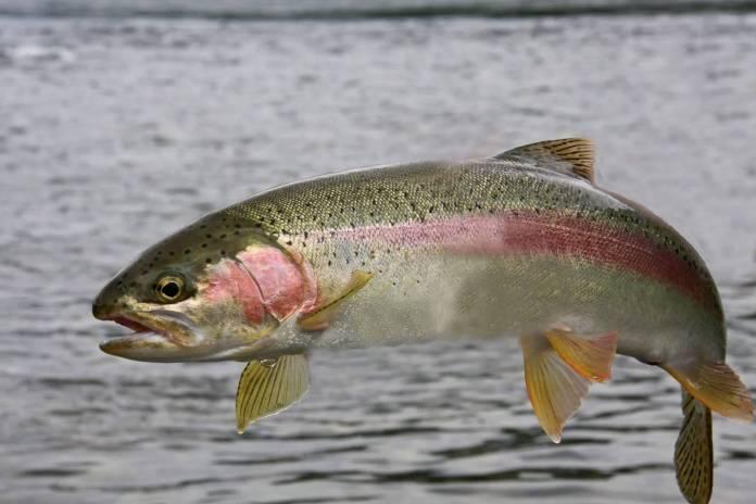 parasitos en peces comestibles