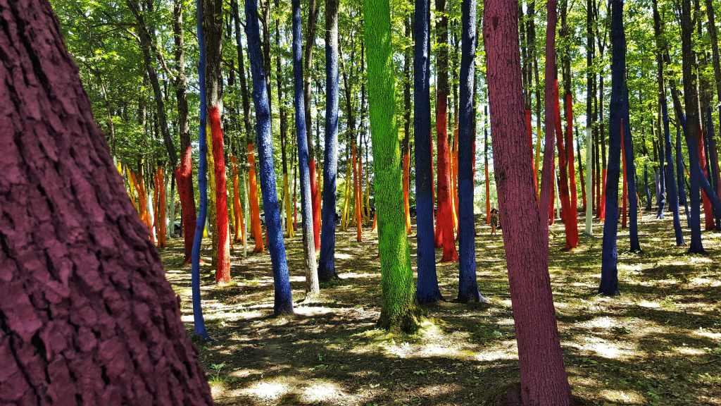 Padurea Colorata - sat Poienari Baia de Fier