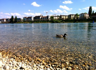 Basel-Rhine-Ducks-Beach