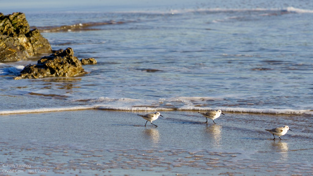 seabirds looking for food in the waves