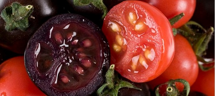 Tech Spotlight: Scientists Create Purple Tomato Juice