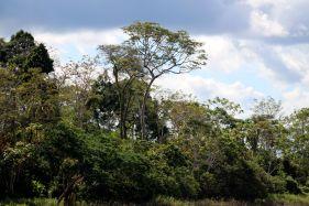 Forest Conservation