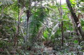 Trocano Araretama Forest 3