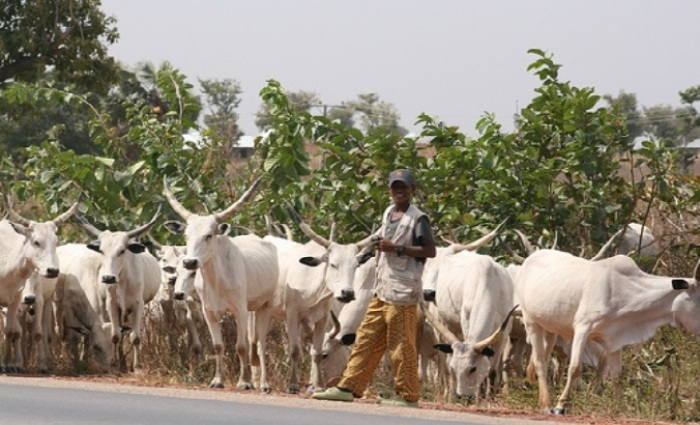 Group Tackles President Buhari Over Open Grazing, Fulanisation Policies