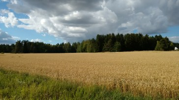 Fields, meadows, nature, Uppsala, Sweden