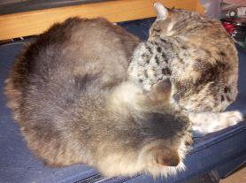 Rolly and Kiku snuggle