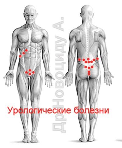 lipitori și erecție)