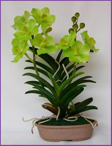 Vanda green