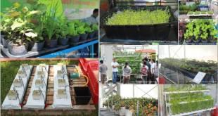 Tổng hợp các mô hình trồng rau tại hội chợ Nông Nghiệp 2012