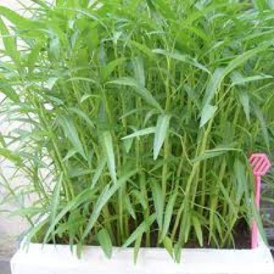Tại sao phải sử dụng phân vô cơ khi trồng rau tại nhà