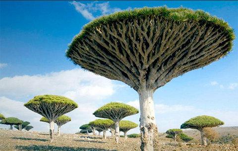 cây kỳ lạ