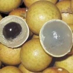 trái nhãn hạt tiêu