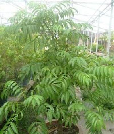 Chín loài cây rau có vị thuốc nên trồng tại nhà