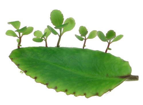 Hướng dẫn cách trồng cây sống đời