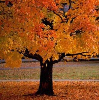 Lá cây đổi màu