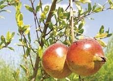 siêu trái cây