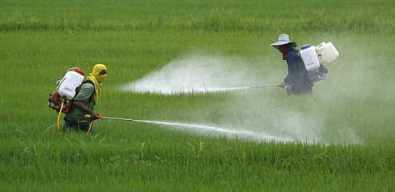 Nông dân phun thuốc trừ sâu trên một cánh đồng - Ảnh: Science Daily