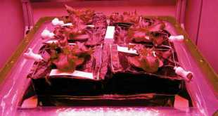 Hệ thống trồng rau Veggie