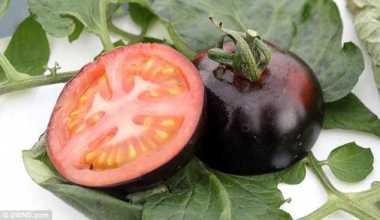 Vỏ của cà chua đen có màu đen, song phần thịt quả vẫn giữ màu đỏ. Ảnh: SWNS.