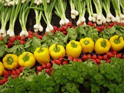 Rau xanh cung cấp cho chúng ta nhiều vitamin thiết yếu cho cơ thể