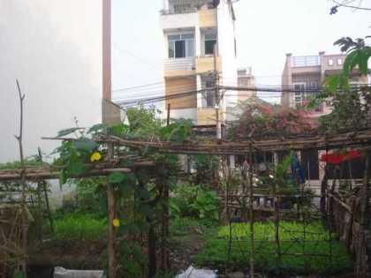 Đất thổ cư chưa xây nhà thì tranh thủ trồng rau