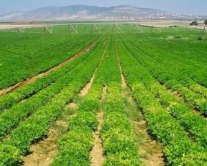 Ở Israel, nông nghiệp là lĩnh vực mà 95% là khoa học và chỉ 5% lao động.