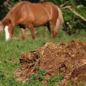 Phân động vật thường được trộn với rơm rạ khô để làm phân bón.