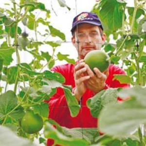 Nông dân Arava đang kiểm tra sản phẩm