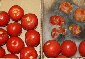 Cà chua sử dụng chất bảo quản và cà chua để tự nhiên trong cùng một thời gian.