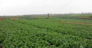 Nông nghiệp công nghệ cao đang là mục tiêu phát triển mà tỉnh Hà Nam đang hướng đến. Ảnh: IT