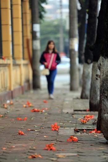 Hoa gạo thường nở rộ vào tháng 3 nhưng năm nay, phải tới đầu tháng 4, người dân Thủ đô mới được ngắm nhìn vẻ đẹp của loài hoa này.
