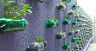 Cây rau có xu hướng mọc mảnh và vươn cao
