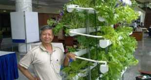 Mô hình trồng rau sạch bằng kỹ thuật thủy canh