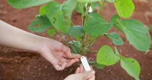 Chọn tạo giống mới đem lại nên nông nghiệp hiện đại với năng suất chất lượng cao